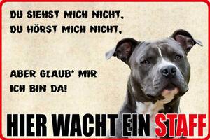 Hier-wacht-ein-Staff-Hund-Blechschild-Schild-gewoelbt-Tin-Sign-20-x-30-cm-W0893