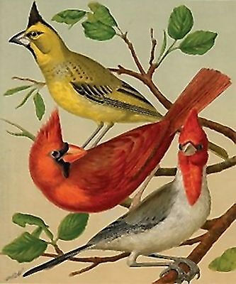 Three Cardinals~counted cross stitch pattern #2004~Birds Graph Nature Chart