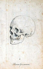 Framed Vintage Medical Print – The Human Skull (Picture Poster Art Anatomy)