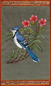 Blue-Jay-Bird-Painting-Rare-Hand-Painted-Indian-Miniature-Wild-Life-Nature-Art
