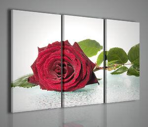 Gemaelde-Moderne-Blown-Rose-Bild-Modern-Rosa-Rot-Einrichtung-Startseite-Buero