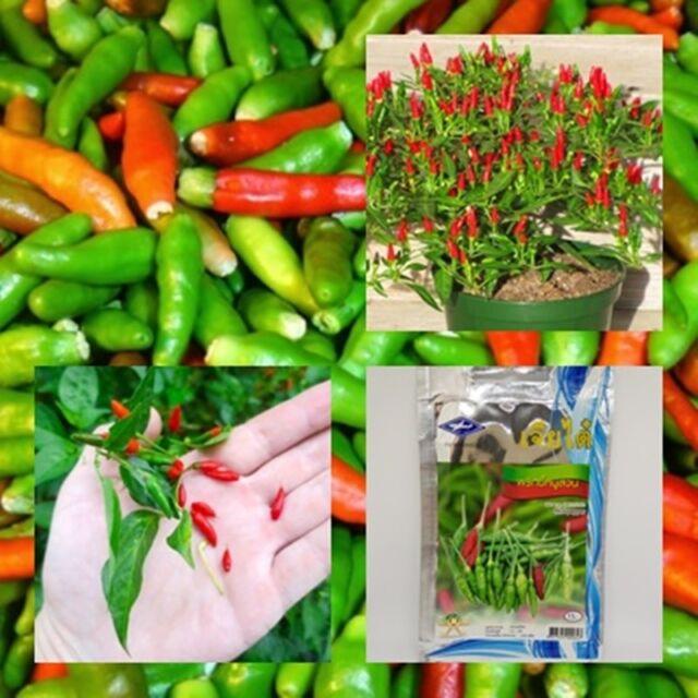 Thai Pepper Seeds Capsicum Annuum Ornamental Chili Seeds Bonsai Plant 100 SEEDS