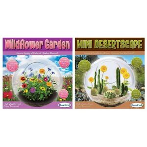 Details About Mini Glass Terrarium Grow Your Own Cactus Flowers Dunecraft 1 Supplied