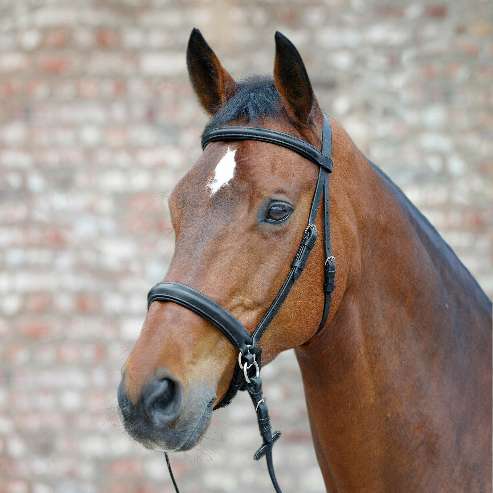 Bitless Bridle Star Bridle without Mouthpiece Leather Complete Reins