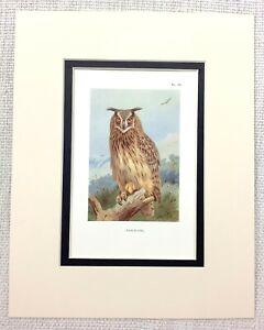 1929 Antico Uccello Stampa Aquila Gufo Gufi Arte Vintage Thorburn's Ornitologia