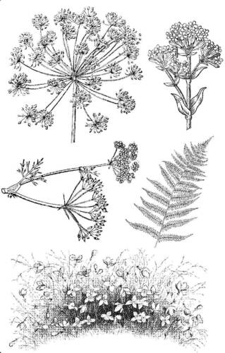 Unmounted rubber stamps Wildflowers