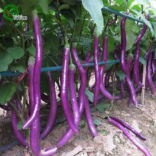 Rare Purple Eggplant Skinny Purple - Delicious & High-Yield Eggplant -25Seeds!