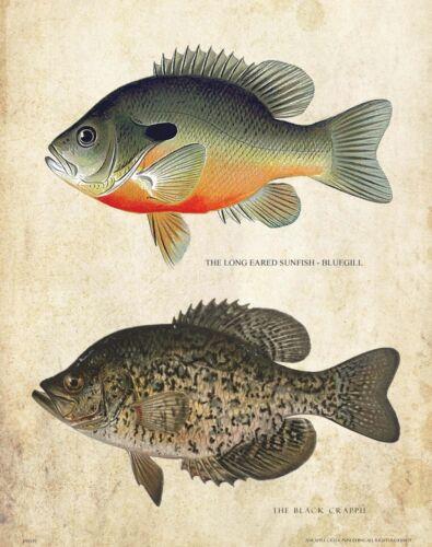 Bluegill Crappie Ice Fishing Patent Art Print Decor Antique Lures Poles PAT449