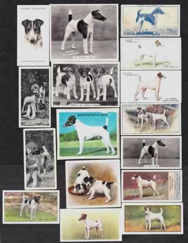 16 Different Vintage SMOOTHHAIRED FOX TERRIER TobaccoCandy Dog Cards