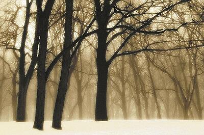 LANDSCAPE ART PRINT - Past Dreams by David Lorenz Winston 11x14 Photo Poster