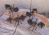 Set Of 4 Rock Ants Made In Mexico Outdoor Safe Office Or Garden Decor Lazy Ants