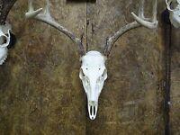 Deer Skull Hanger, Deer Skull Bracket, Deer Skull Mount Hanger, Hanger Only