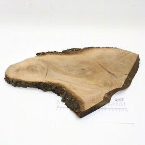 Waney-Edged-English-Holm-Oak-wood-board-360-x-560-x-30mm-Plank-bark-4814