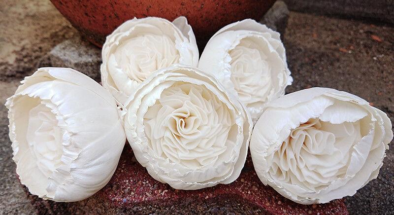 15 Rose Frizzy 8 cm dia Flower Diffuser Handmade Sola Wood Wholesale Spa Wedding Craft