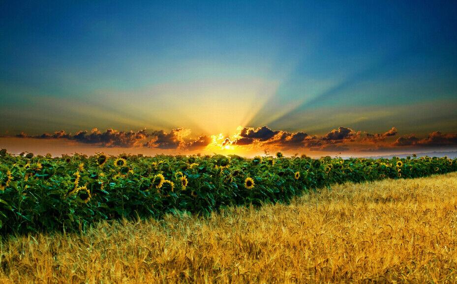 3D SonnenBlaume Abenddämmerung 8Tapete 8Tapete 8Tapete Wandgemälde Tapete Tapeten Bild Familie DE   Kaufen Sie online     5e2b7c