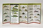 The Ultimate Guide to Freshwater Fishes of Texas by Steven M. Lewers & Associates (Paperback / softback, 2007)