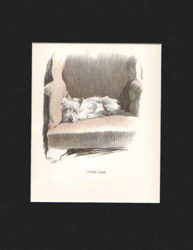 Gorgeous West Highland White Terrier by Cecil Aldin 1930 Print 10 X 13 Mat
