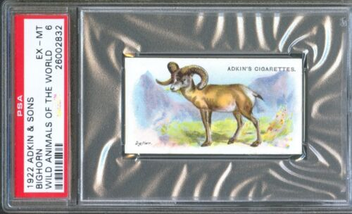 1922 Adkin & Sons BIGHORN SHEEP Wild Animals of the World Trade Card PSA 6