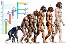 Framed Print - The Evolution of Humans (Picture Poster Homosapien Art Man Woman)