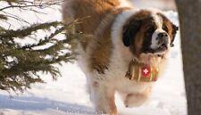 Sleigh Bells Keg Jingle Leather Strap Collar Saint Bernard St Dog Wood Barrel