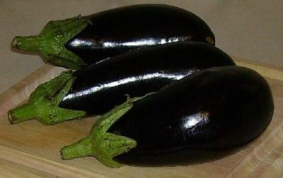 200 Black Beauty Eggplant Seed Vegetable Garden Seed Free Shipping