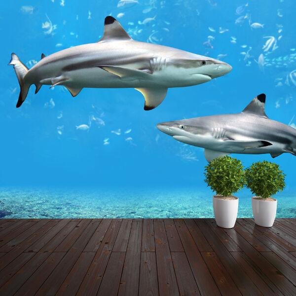 Sharks underwater nature wallpaper mural design wm025