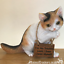 boxed Cat licking paw ornament sculpture figurine removable sign cat lover gift