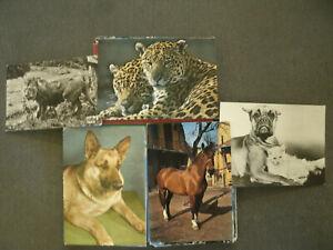 Lotto-30-Cartoline-ANIMALI-Colori-Bianco-e-Nero