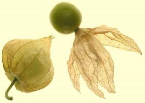 wächst rasend schnell ☼ gesundes Gemüse und Duftkraut ❆ Samen ❆ Ananaskirsche..