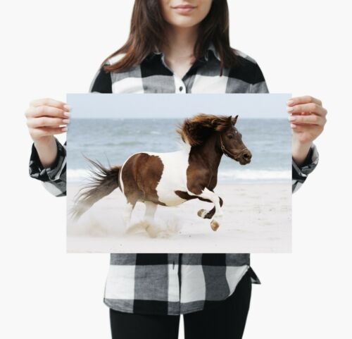 Awesome Shetland Pony Poster Print Size A4 A3 Horse Animal Poster Gift #8605