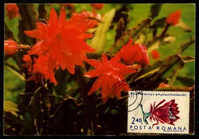 Erfinderisch Romania Mk 1971 Flora Kakteen Kaktus Cacti Maximumkarte Maxi Card Mc Cm Dx66 Reich An Poetischer Und Bildlicher Pracht Maximumkarten
