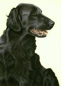Nigel-Hemming-JUST-DOGS-BLACK-FLAT-COATED-RETRIEVER-Gun-Dog-Flatcoat-Art-Print