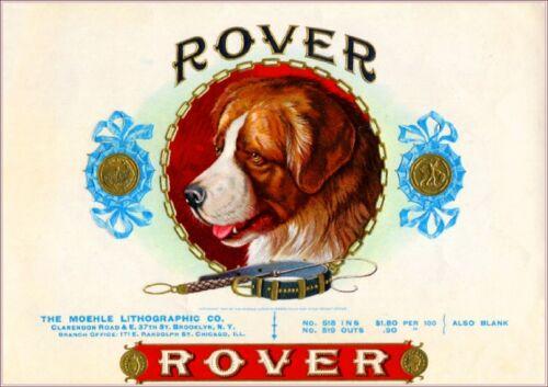 Rover Saint Bernard Dog Vintage Smoke Cigar Box Crate Inner Label Art Print