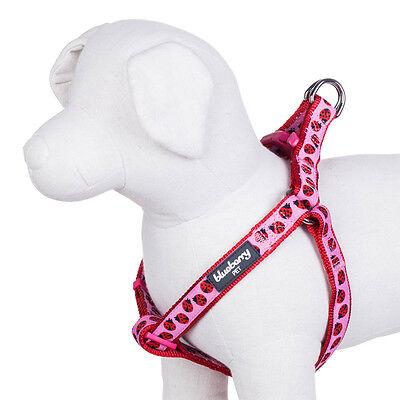 Blueberry Pet Ladybug Designer No Pull Adjustable Nylon Dog Harness, S M L