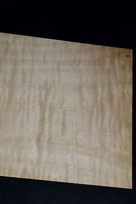 Curly Maple Raw Wood Veneer Sheets 6 x 38 inches 1//42nd          8632-29