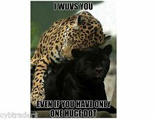 Funny Black Panther Leopard  Refrigerator / Tool Box Magnet Gift Card Insert