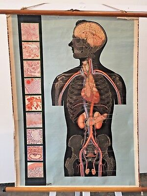 Fine Original Vintage Scientific Anatomy Chart With Diagram Of Human Wiring Cloud Oideiuggs Outletorg