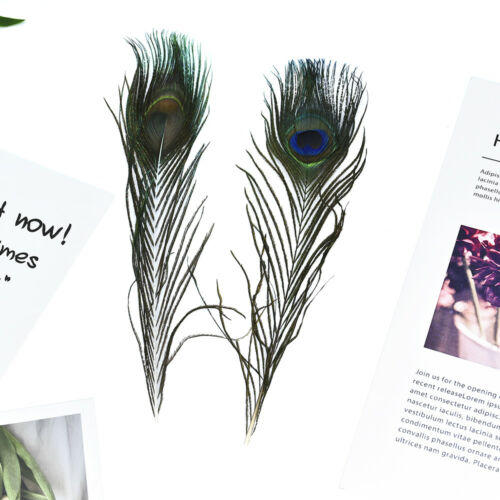 10Pcs 100/% Real Natural Peacock Tail Eyes Feathers Wedding Party Decor 25-30cm