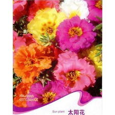Hot 1 Pack 200 Seeds Sun Plant Flower Seed Portulaca Grandiflora WCY SP