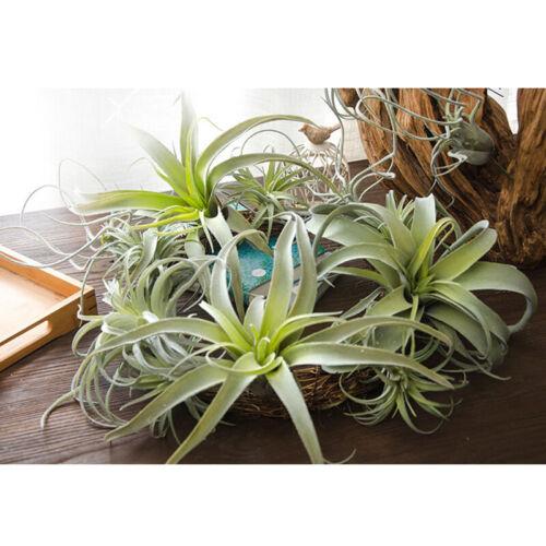 Hochzeit Vorräte Bukett Wand 1 Künstlich Pflanze Succulent Luft Heim