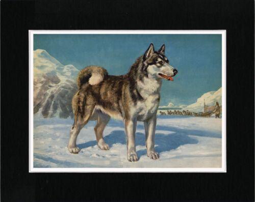 SIBERIAN HUSKY ESKIMO SLED DOG LOVELY VINTAGE STYLE ART PRINT READY MATTED