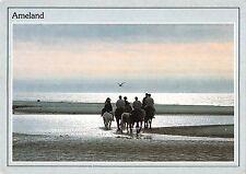 BT4672 Ameland horses chevaux Netherlands