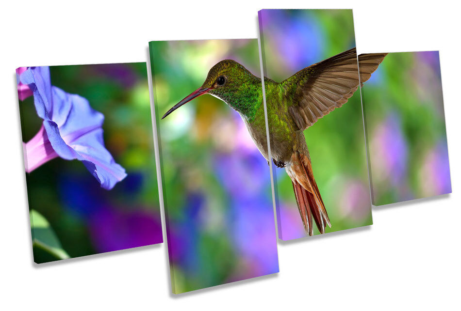 Beautiful Humming Bird CANVAS WALL ART MULTI  Box Framed