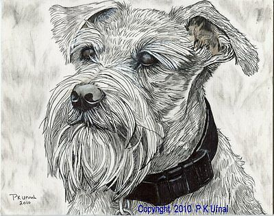 Dog Art,Pencil/&Ink Drawing,Schnauzer Print #12,PK Ufnal