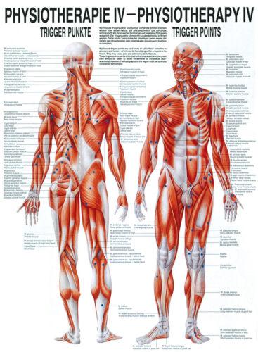 Rüdiger Anatomie Triggerpunkte Poster 24cm x 34cm NEU /& OVP