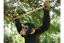 Climbing-Monkey-Garden-ornament-Monkey-hanging-tree-statue thumbnail 3