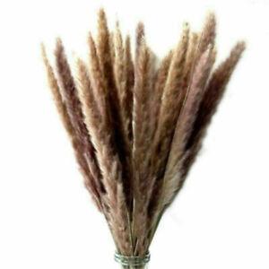 15Pcs-Set-Natural-Dried-Pampas-Grass-Reed-Home-Wedding-Flower-Bunch-DIY-Decor-H7