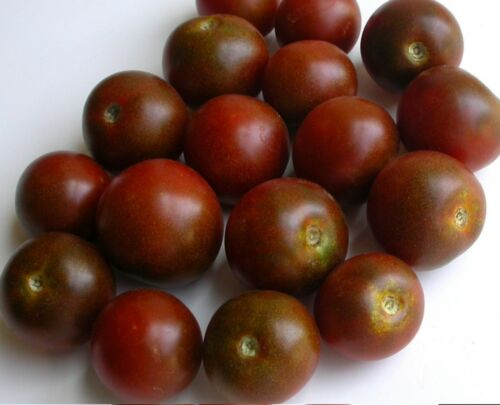 Black Cherry Tomato Seeds 2018 Seeds   $1.69 Max Shipping 40 Heirloom Variety