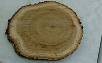 12 Pc 9 Long And 6 Wide Oak Log Oval Slices Wood Disk Rustic Wedding Coaster