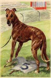 Greyhound-MATTED-Dog-Art-Print-German-NEW-U